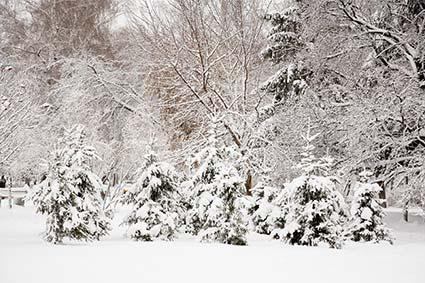 snowstorm_adk.jpg