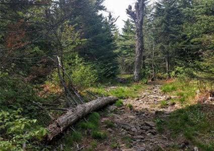 hiking89.jpg