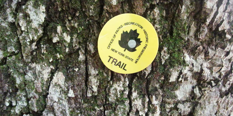 yellow New York State trail marker on a tree
