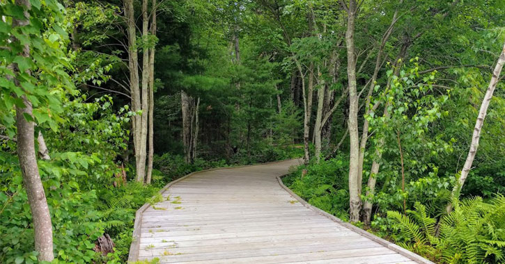 a wooden hiking path in the woods