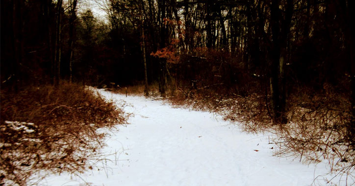 a snowy trail in the woods