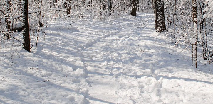 a trail through the snow in the woods