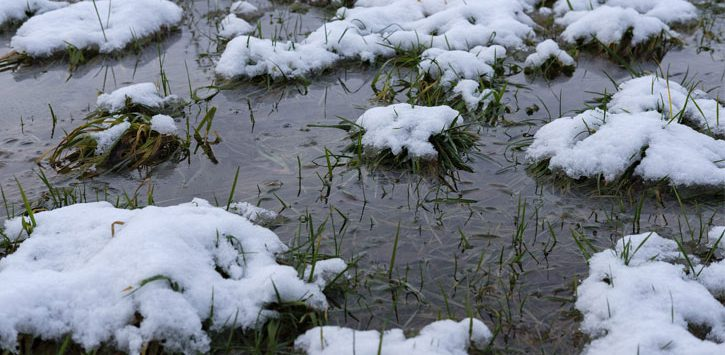 patches of snow and ice in grass