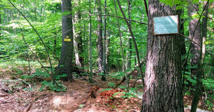 trees in the woods with signs on them
