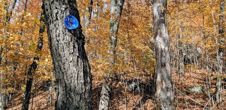 foot trail marker on a tree in the woods