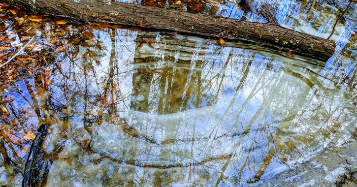 reflection of trees off ice in the woods