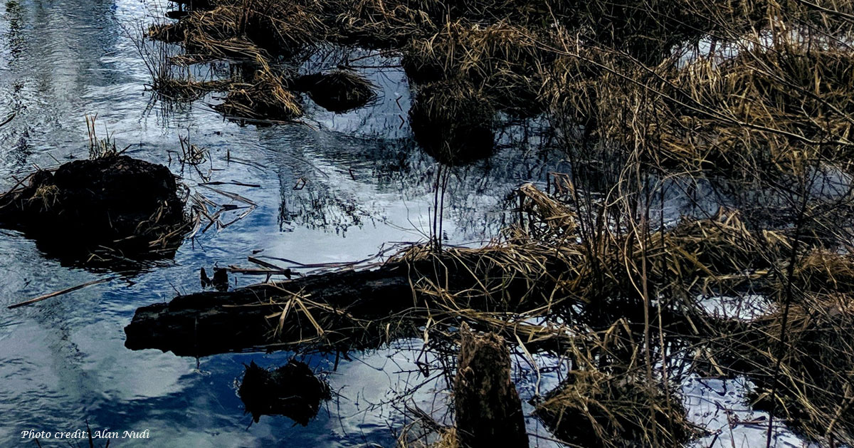 watery woods