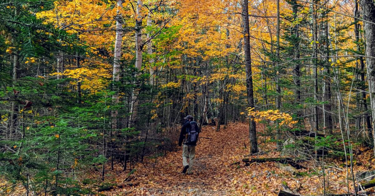 man hiking in the woods in the fall