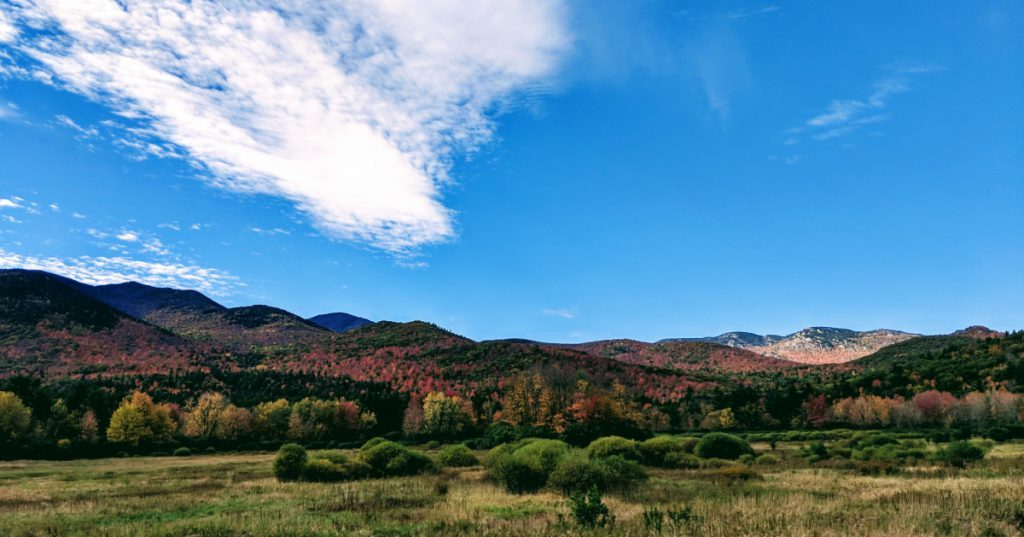 view of fall foliage on trees