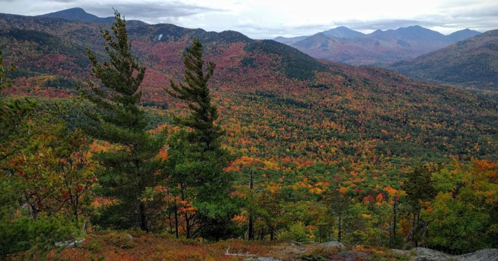 view of fall colors in woods