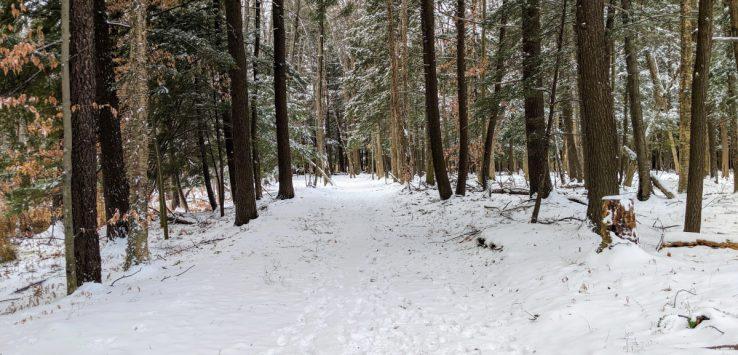 snowy nature preserve
