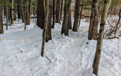 path in woods in the winter