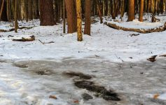 icy trail