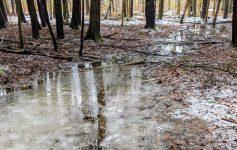 slushy trail