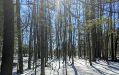 sun shining through trees in woods with snow on ground