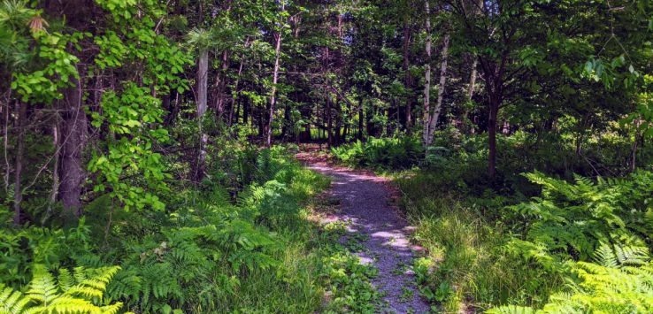 trail to woods