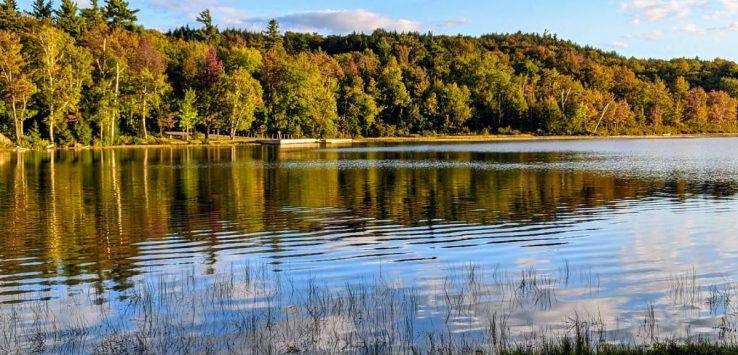 foliage by lake