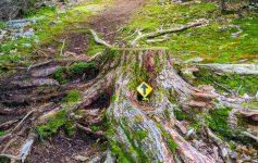 trail marker on a tree stump