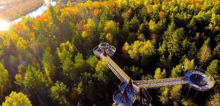 wild walk aerial view, fall
