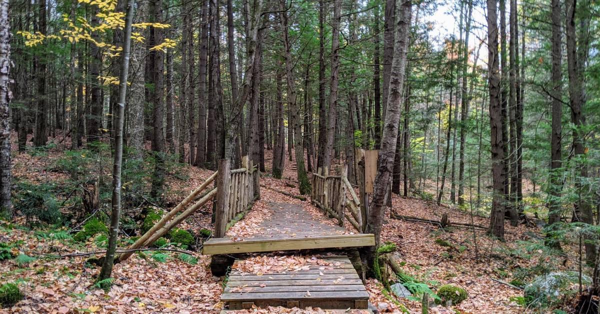 bridge in woods