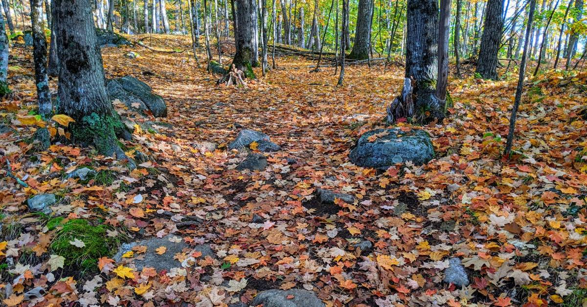 leaves on the ground in the woods