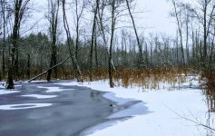 a frozen pond in the woods