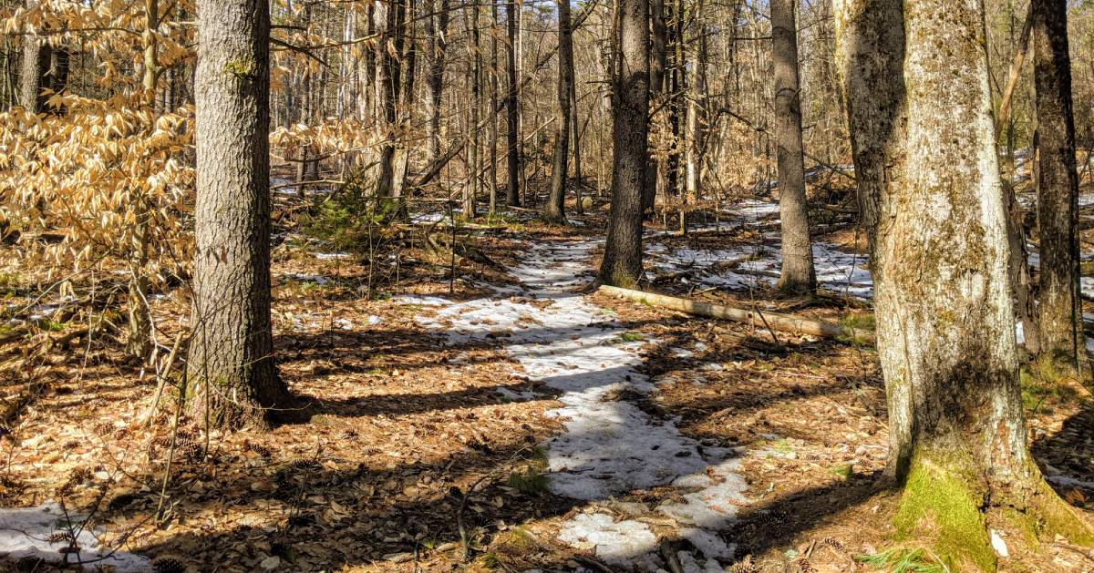 trail in the woods with some snow on it