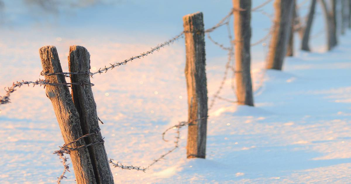 barbed wire fence in the snow