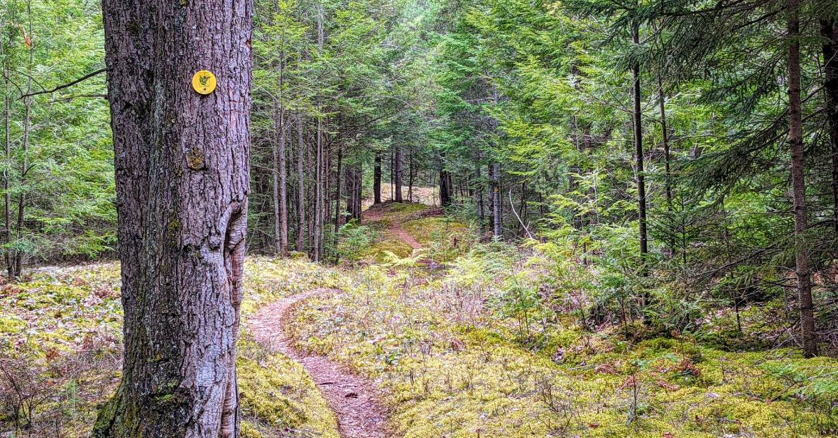 hiking trail and tree with trail marker