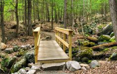 bridge on trail in woods