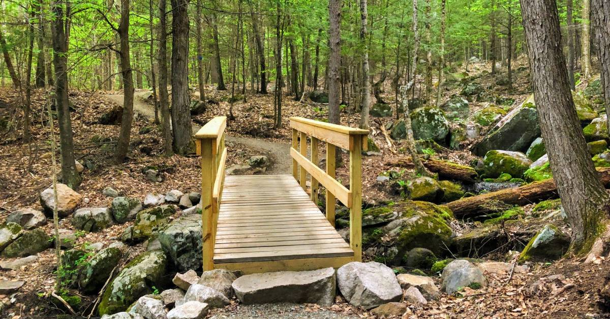 bridge on trail in woods