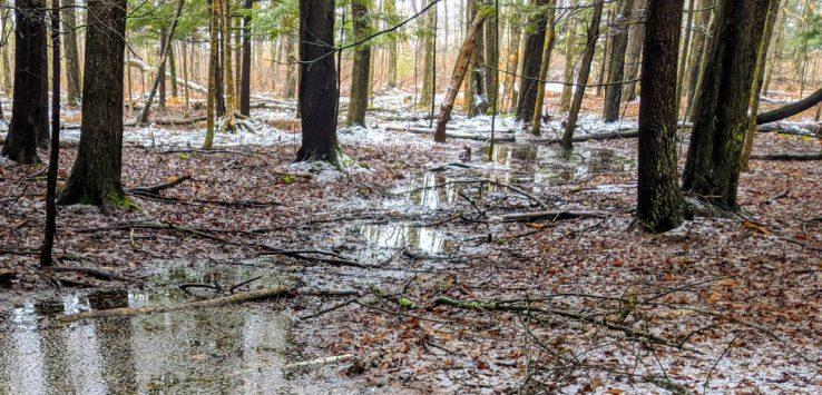 slushy woods