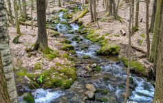 stream in woods