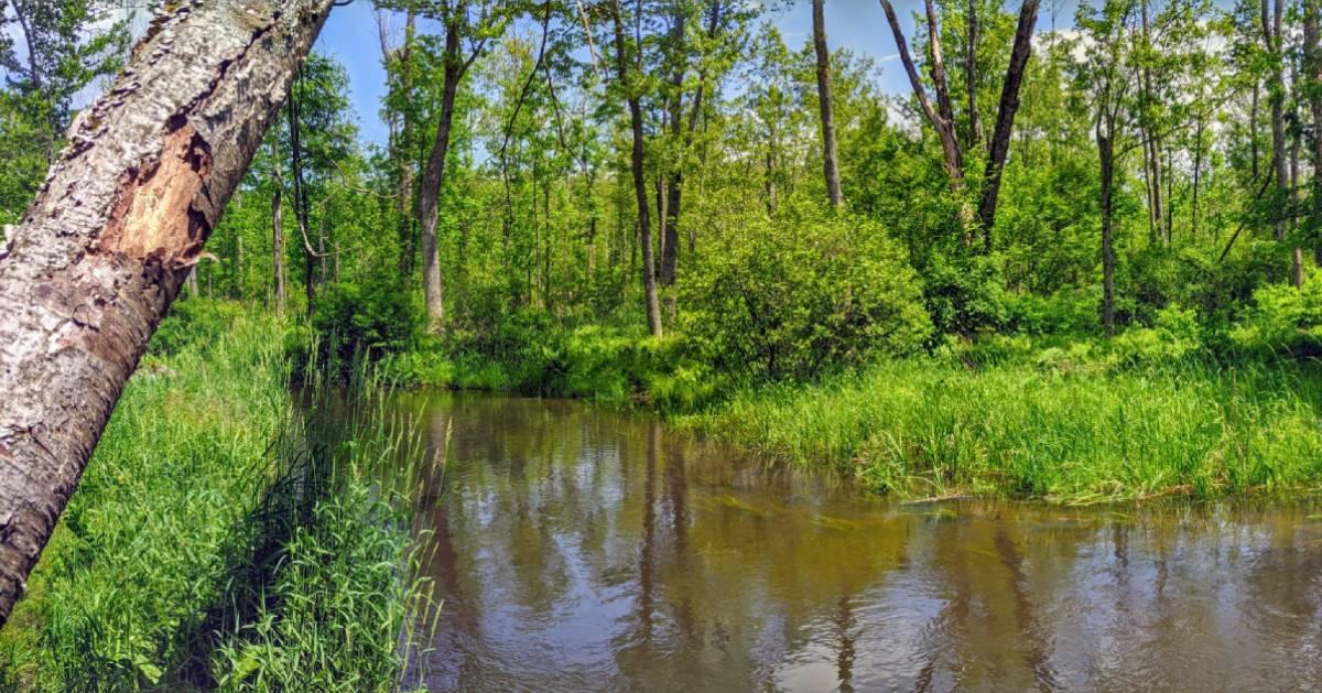 brook in preserve