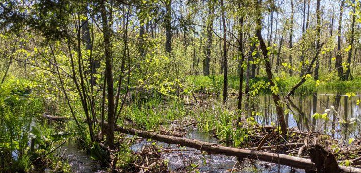 stream in woods
