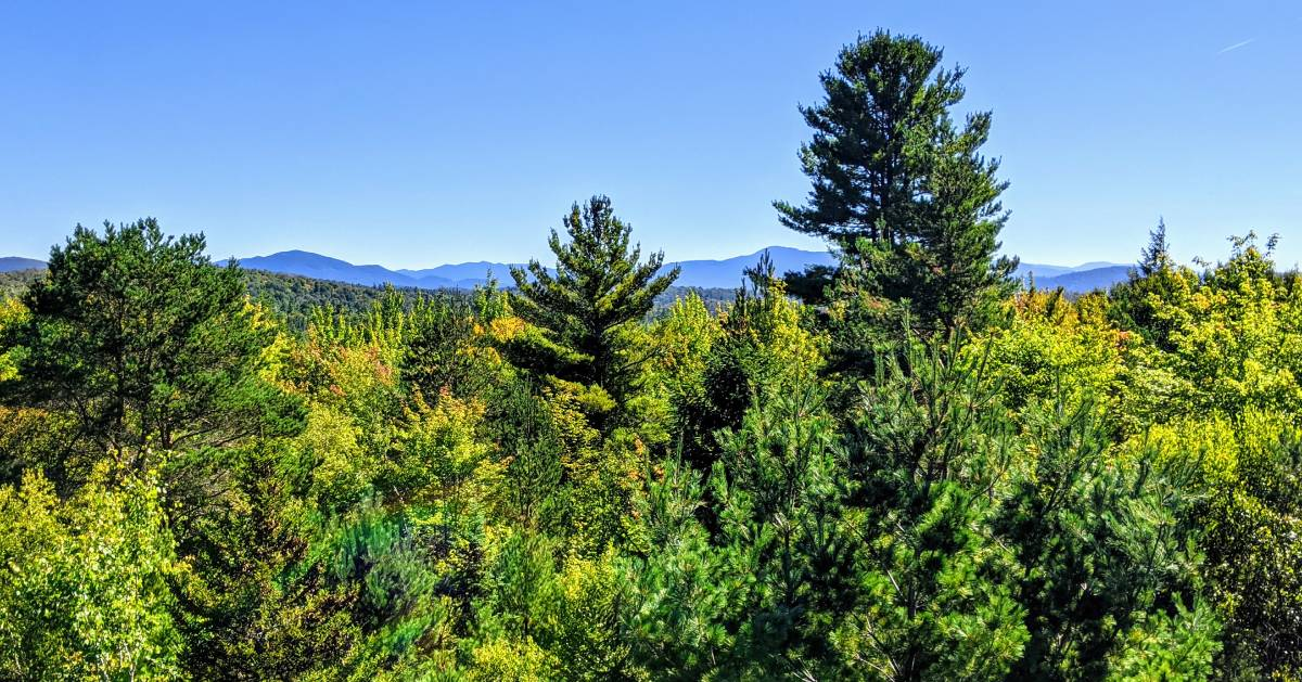 view of mountains and trees