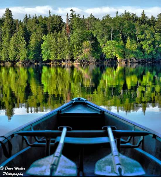 Overlooking trees reflecting on a lake from a canoe