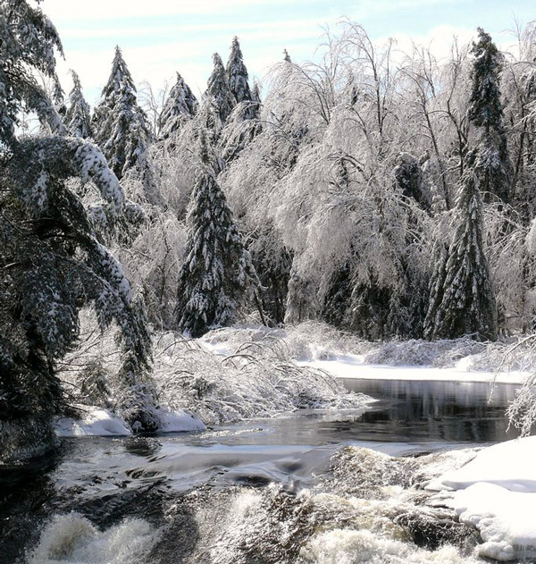 Bog River lined with iced over trees