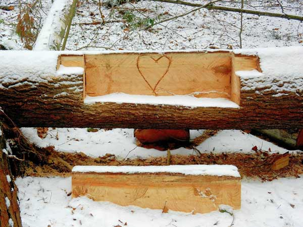 freshlay carved seat and heart in a fallen tree