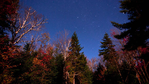 Trees with the starts of colors turning against a starry sky