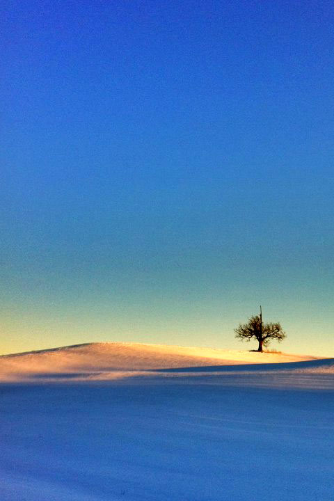 Snowdrifts and a lonesome tree against a blue sky