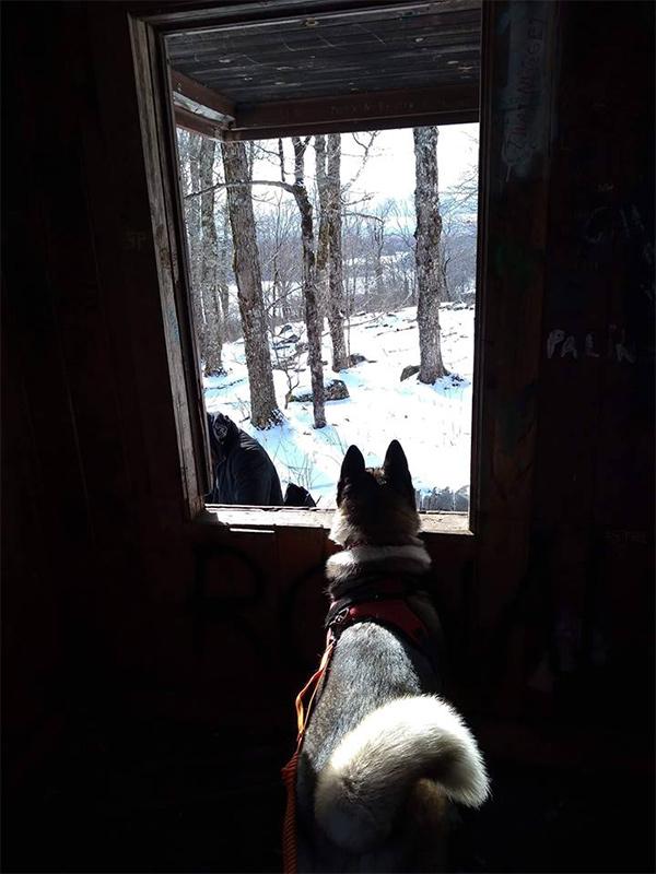 dog in a cabin