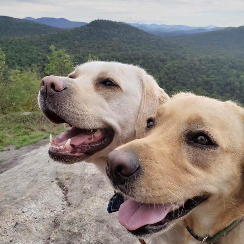 two yellow labs on top of a mountain
