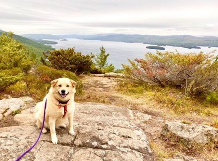 Yellow lab atop a mountain in the fall