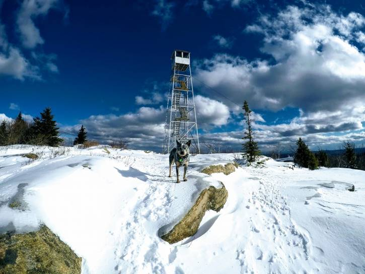 Big dog atop snowy mountain with a fire tower