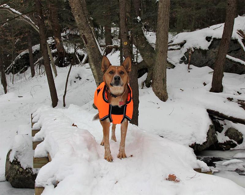 dog in snow wearing an orange coat