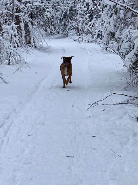 dog running on a trail in the snow