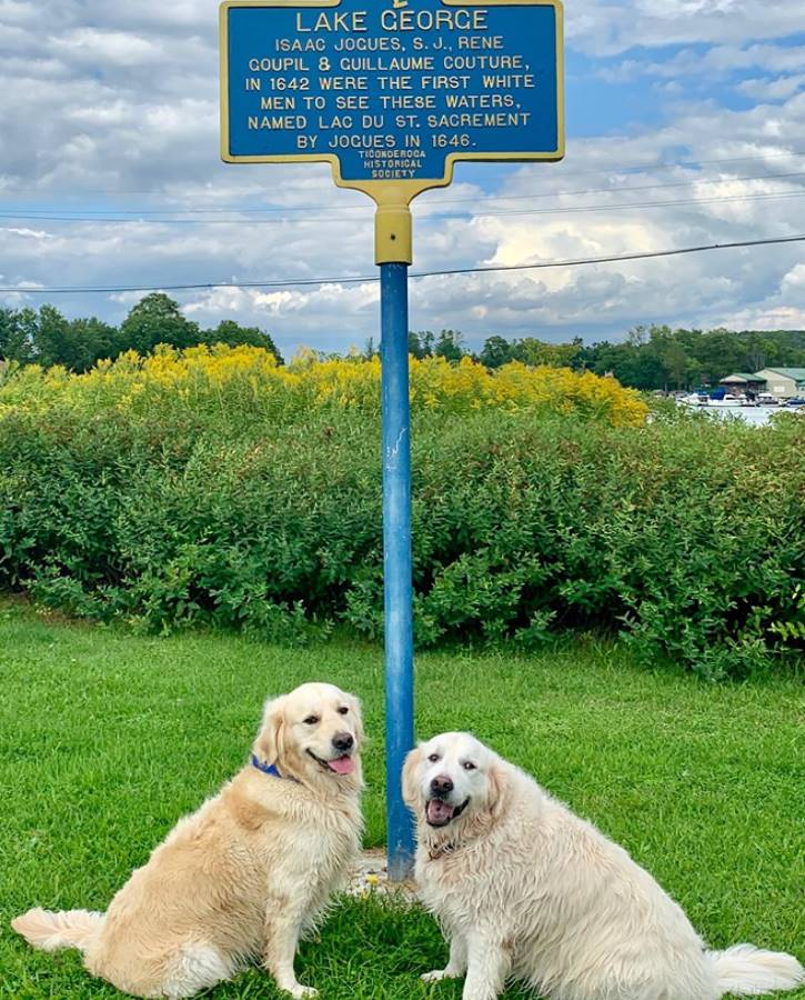 Two golden retrievers sitting by historical sign