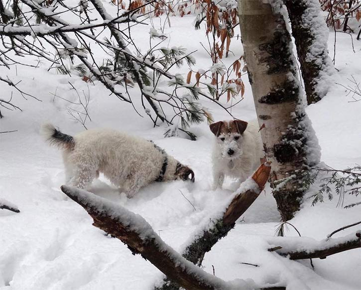 two small dogs digging in the snow