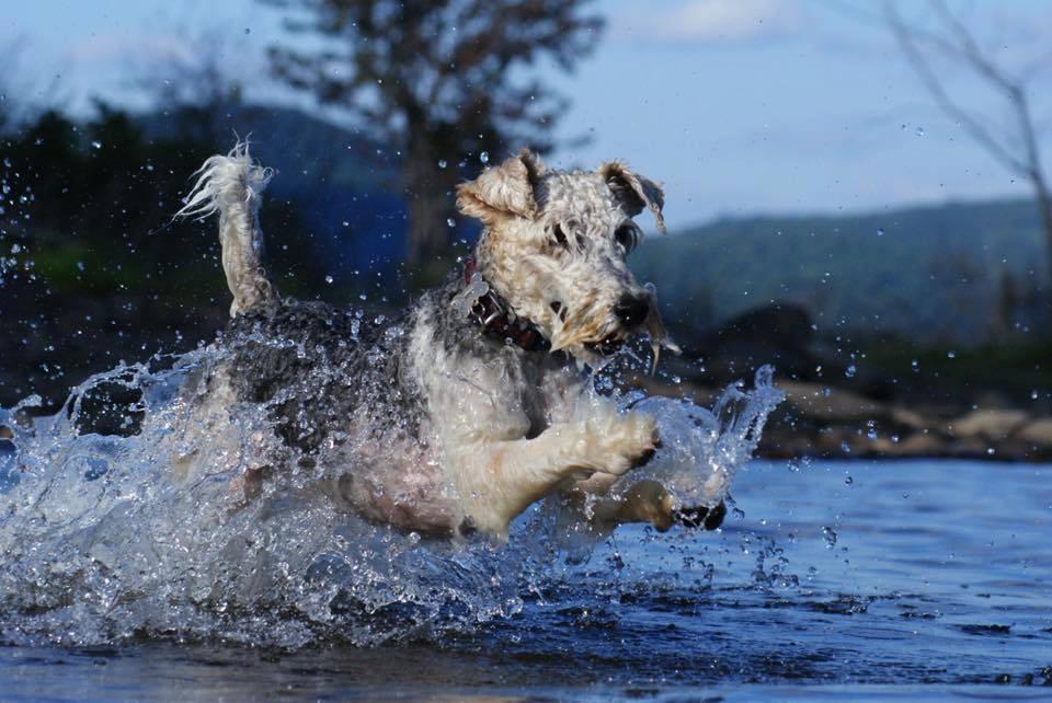 dog splashing in lake